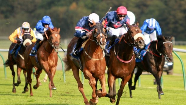 Martingala a equitazione e equestre