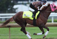 I Criteri Principali Per Scommettere Sui Cavalli: Equitazione